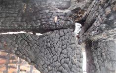 Case Study - Colchester Granary Fire Damage - Image 4