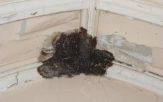 Timber Condition Dry Rot