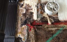 Timber Dry Rot