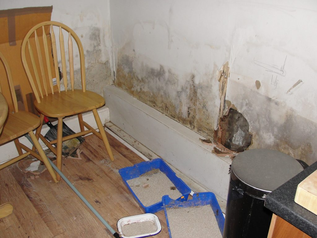 Localised damp on wall