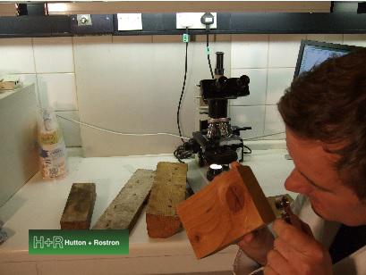 Timber species identification