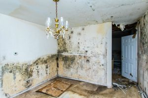 damp surveys - image of severe damp in a living room